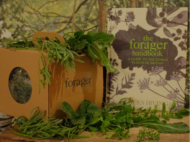 Wild Fresh Box + Book